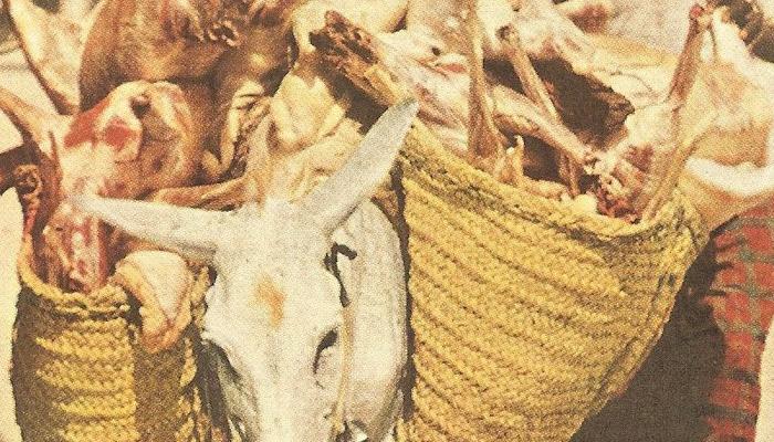 Donkeys as transportation in Hajj 1953