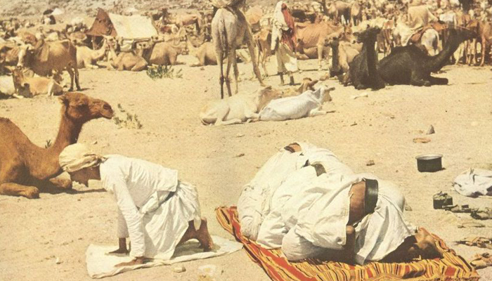 Flocks are praying near their camels 1953